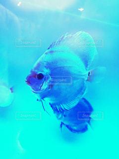 水面下を泳ぐ魚たちの写真・画像素材[1314197]