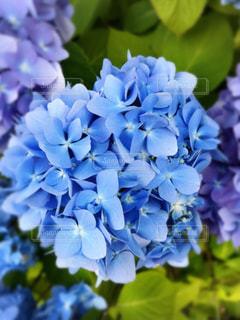 近くの花のアップの写真・画像素材[1320071]