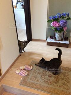 猫の写真・画像素材[647290]