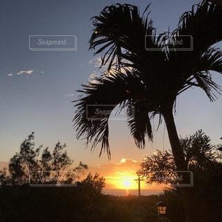 背景の夕日とヤシの木のグループの写真・画像素材[1309981]