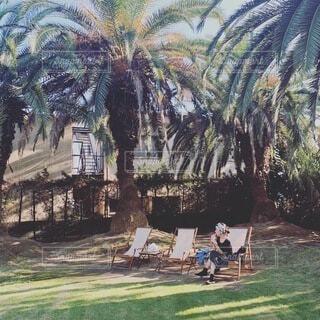 ヤシの木で南国気分の写真・画像素材[4095258]