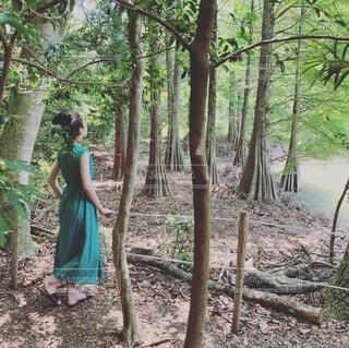 木の隣に立っている人の写真・画像素材[4095257]