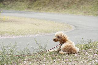 犬の写真・画像素材[451844]