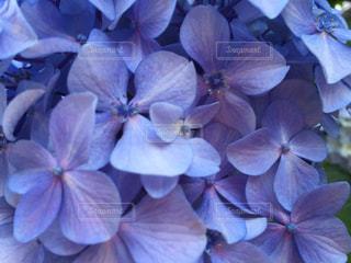 お花畑の写真・画像素材[542246]