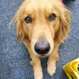 愛犬の写真・画像素材[567010]