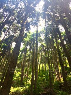 森林の写真・画像素材[453232]