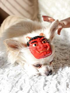 犬,かわいい,ペット,イベント,鬼,お面,節分,恵方巻き,行事,性別