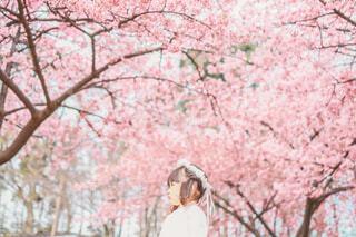 桜と娘の写真・画像素材[4251762]