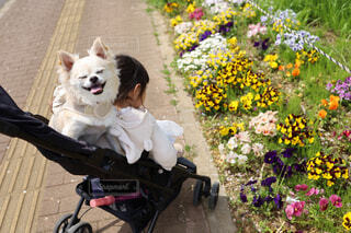 春のお散歩の写真・画像素材[4338411]