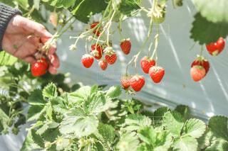 果物と野菜のグループの写真・画像素材[4455931]