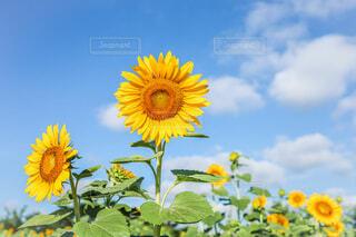 花のクローズアップの写真・画像素材[4670919]