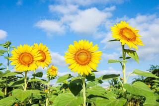 花のクローズアップの写真・画像素材[4670917]