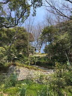 自然,緑,階段,山道,横浜,坂道,根岸,急坂,つづら折り
