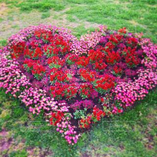 花,緑,赤,ガーデニング,ハート,花壇,横浜,暖色,ガーデン,花文字