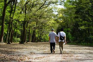 京都の写真・画像素材[459672]