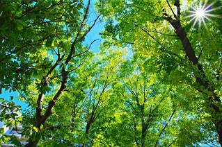 森の写真・画像素材[457145]