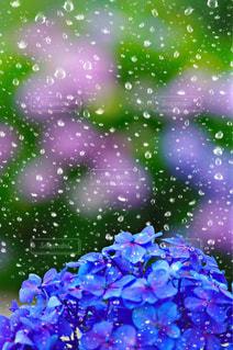 雨の写真・画像素材[536342]