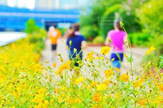 女性,アウトドア,スポーツ,ジョギング,ランニング,マラソン,隅田川,運動,スポーツウェア