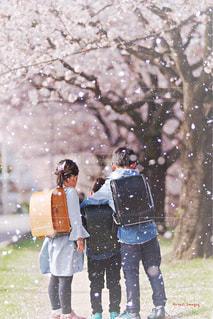 自然,アウトドア,公園,花,春,桜,屋外,花見,子供,サクラ,仲良し,お花見,兄弟,入学,ランドセル,さくら