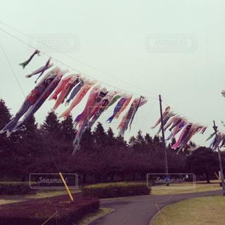 こいのぼり,栃木県,運動公園,小山市,県南体育館