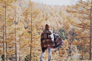 木の上に乗る男 - No.856286