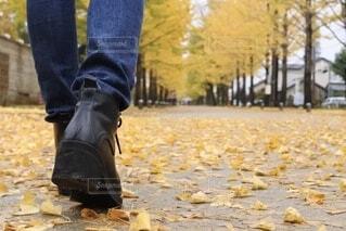 銀杏並木散歩の写真・画像素材[3717924]