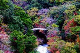 緑豊かな森の鉄道の写真・画像素材[1646481]