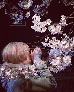 花,桜,花見,夜桜,人,ブロッサム
