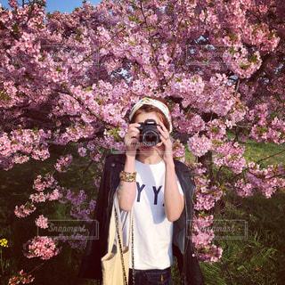 花,春,桜,屋外,満開,ブロッサム