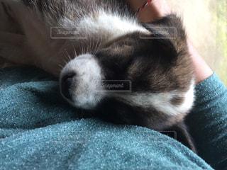 犬,寝顔,バリ犬
