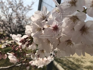 花の写真・画像素材[2038694]