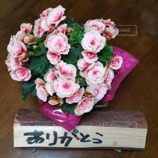 花の写真・画像素材[480752]