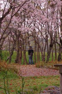 公園の写真・画像素材[458959]