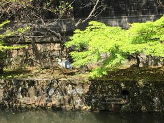 倉敷の写真・画像素材[466240]