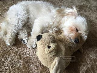 犬の写真・画像素材[493280]