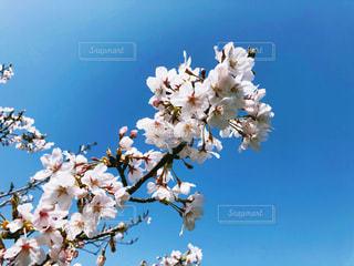近くの花のアップ - No.1108029