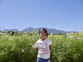 コスモス畑とムスメっこの写真・画像素材[1459086]