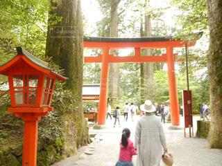 後ろ姿,子供,女の子,こども,おでかけ,箱根神社
