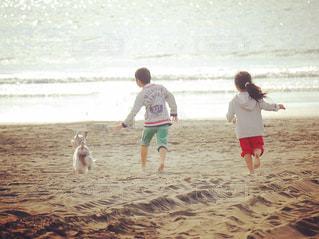 犬,海,キッズ,散歩,子供,女の子,男の子,お散歩