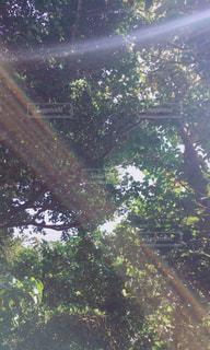 森の写真・画像素材[457793]