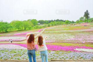 芝桜の写真・画像素材[473552]