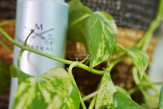 近くの植物のアップの写真・画像素材[966743]