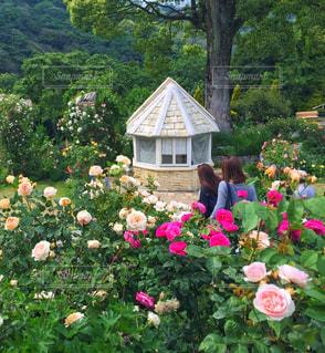 お花畑 - No.478703