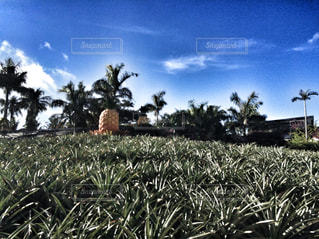 沖縄の写真・画像素材[481432]