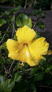 花の写真・画像素材[481623]