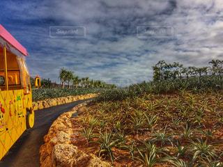 沖縄の写真・画像素材[484103]