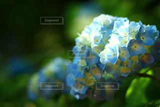 自然 - No.564087