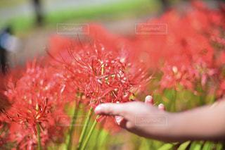 近くに花を持っている人のの写真・画像素材[887179]