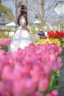 近くの花のアップ - No.908876