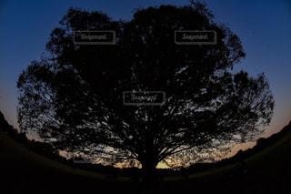 近くの木のアップの写真・画像素材[956999]